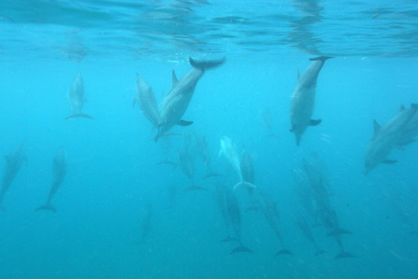 Dolphins!!
